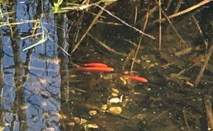 IMG_0352-vissen klein